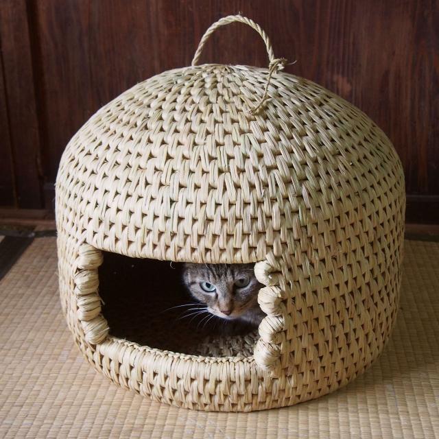 長野県栄村 猫つぐら