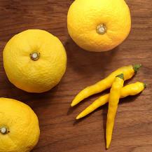 【WEB限定】【予約商品】【数量限定】旬の手しごと 黄色い柚子胡椒